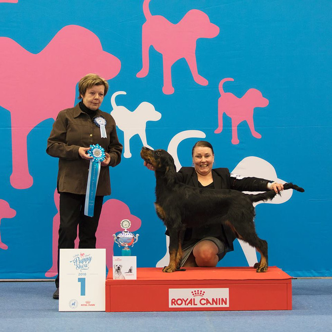 Finnish Winner Puppy Show