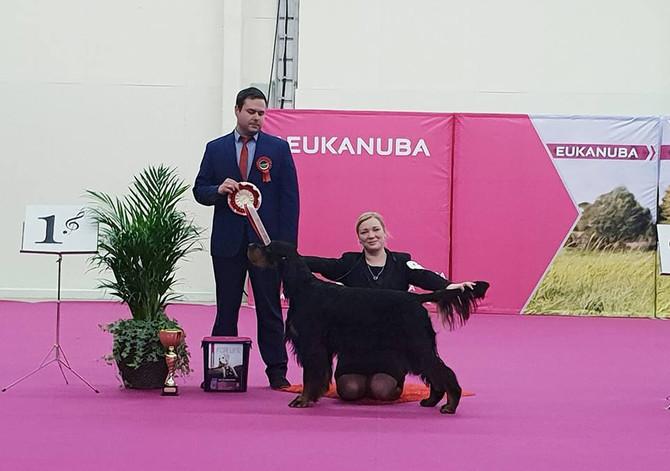 Turku Top Dog Show