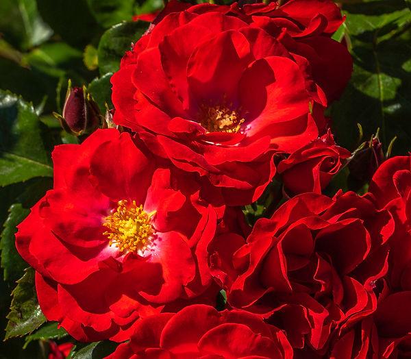 Garden 18.jpg