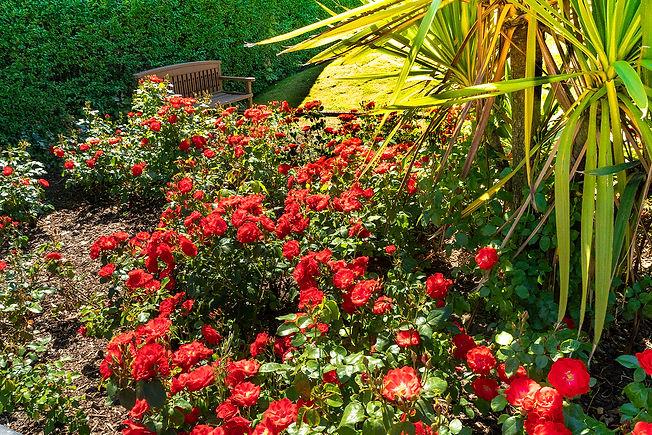 Garden 22.jpg