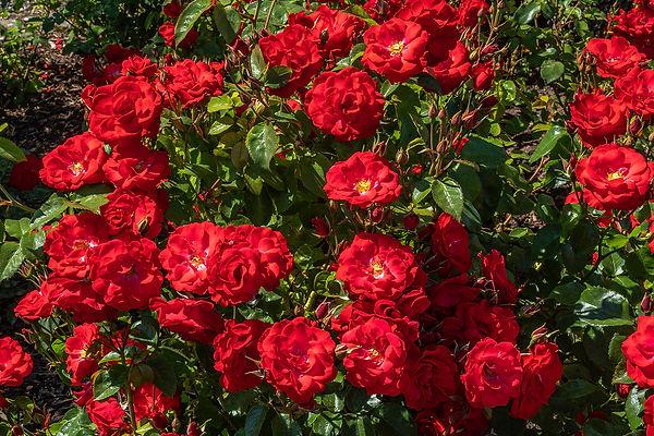 Garden 19.jpg