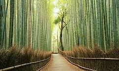 bamboe2.jpg
