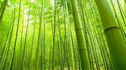 bamboe.jpg
