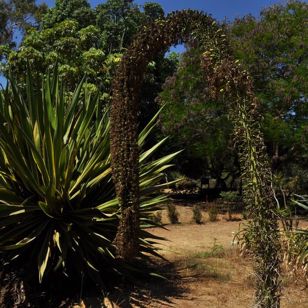 L'idée d'un jardin botanique était dans l'esprit des fondateurs, dès les premières années. Les premières plantations débutent en 1923 avec M. Segal et se développent avec l'aide du professeur Otto Warburg en 1928.