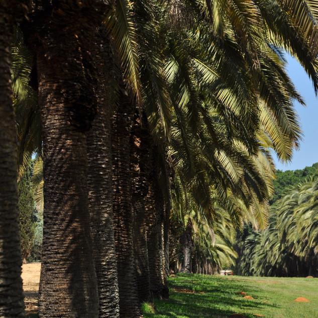 La palmeraie, Avenue Tamar Canarie.