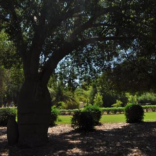L'objectif du jardin botanique est d'étudier l'adaptation aux particularités du climat israélien, d'espèces végétales en provenance du monde entier. Dès les premières années d'activités, des graines et boutures sont distribuéesdans tout le pays.