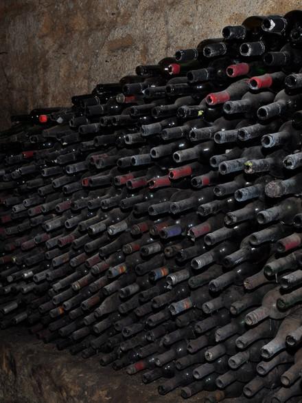 Après 32 ans d'arrêt de ses activités viticoles, Mikvé-Israël plante à nouveau des vignes et produit du Merlot, du Malbec et du Petit verdot.