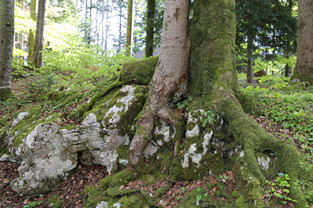 Impressionen aus dem Tannwald Seelisberg