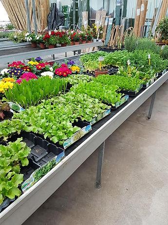 garden-center-brizzolara-vivaio