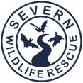 Logo potential final (1).png
