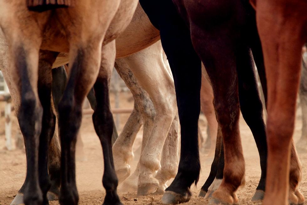 Horse Legs_edited.jpg