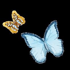 水彩蝴蝶1