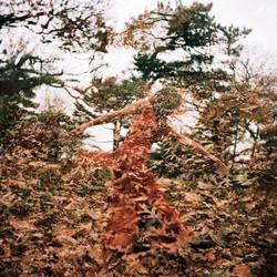 Fall Dance, 2010