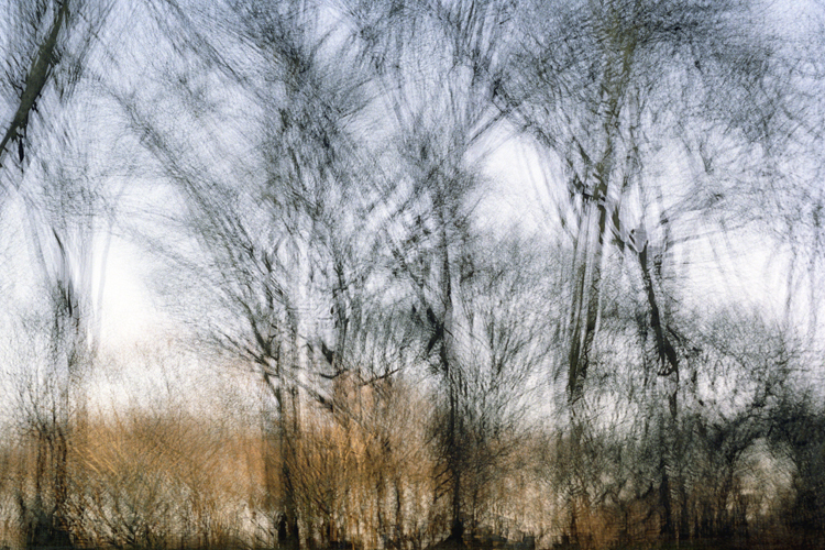 Drawing Branches, 2007