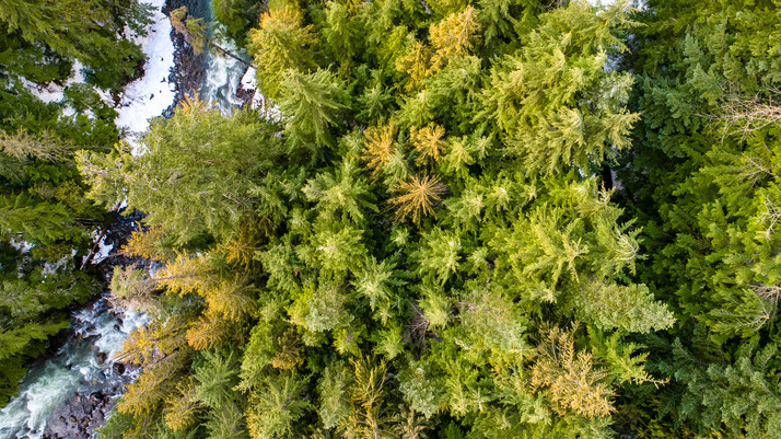 CHEAKAMUS_FOREST_AERIAL_HR-4.jpg