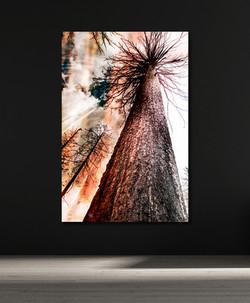 Deep Roots - Amber Light