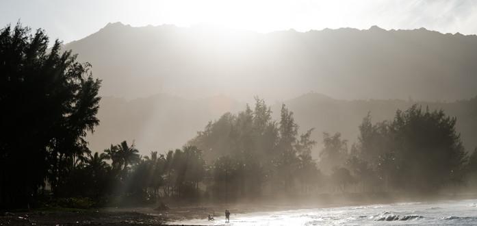 PIneTrees_Kauai.jpg