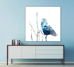 Snowy Owl - Winter Blues