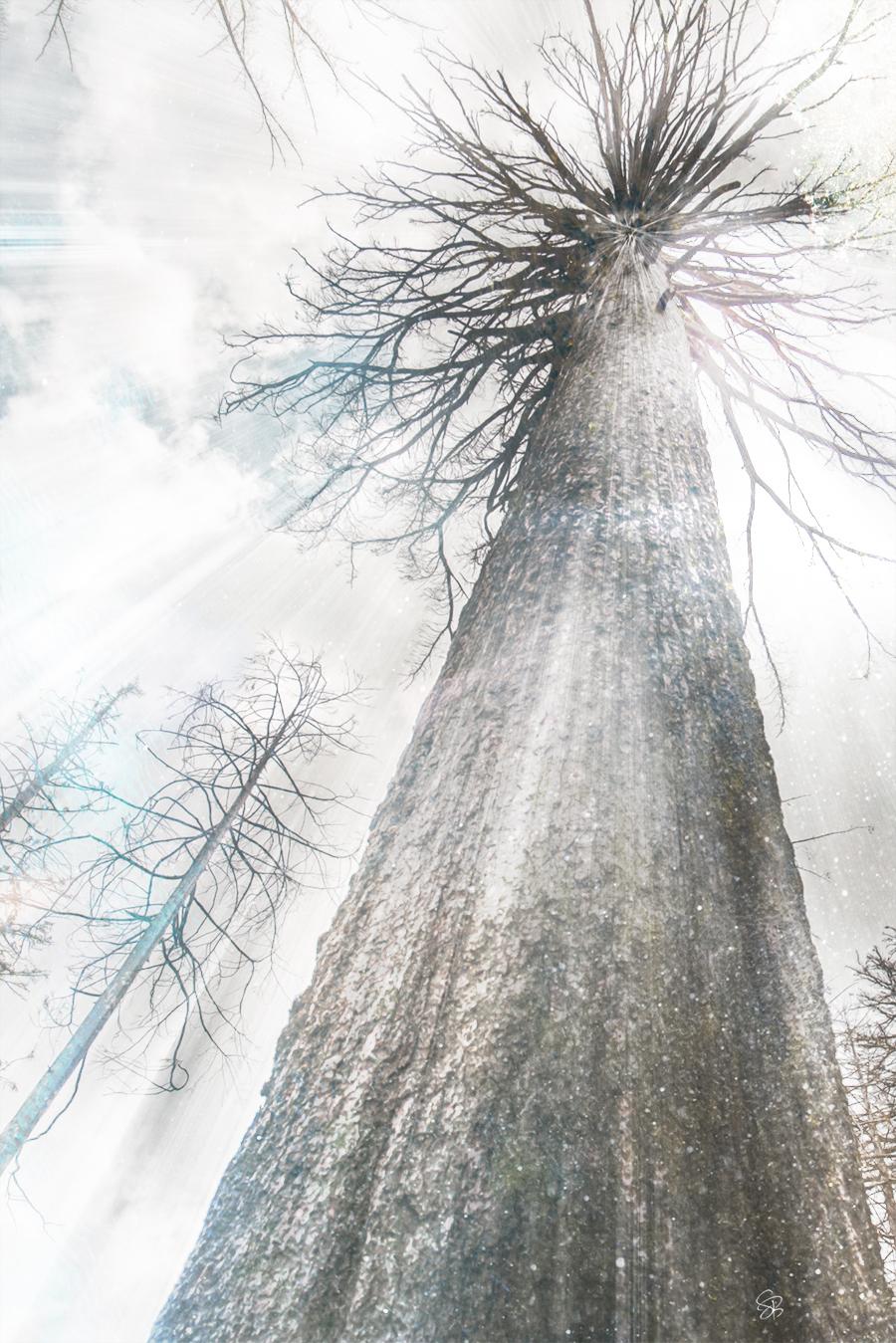 Deep Roots - Timeless