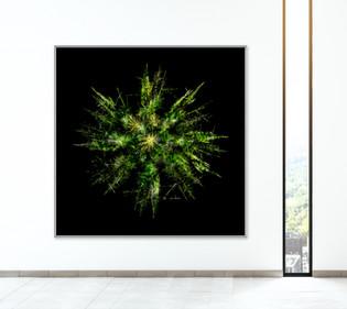 Treeflake - Growth