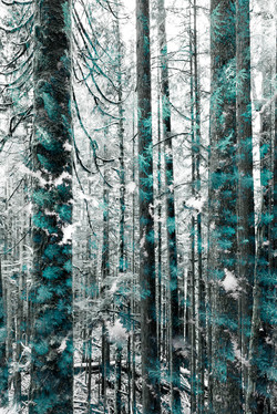 Mother Nature Teal