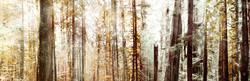 Avatar Grove - Clarity