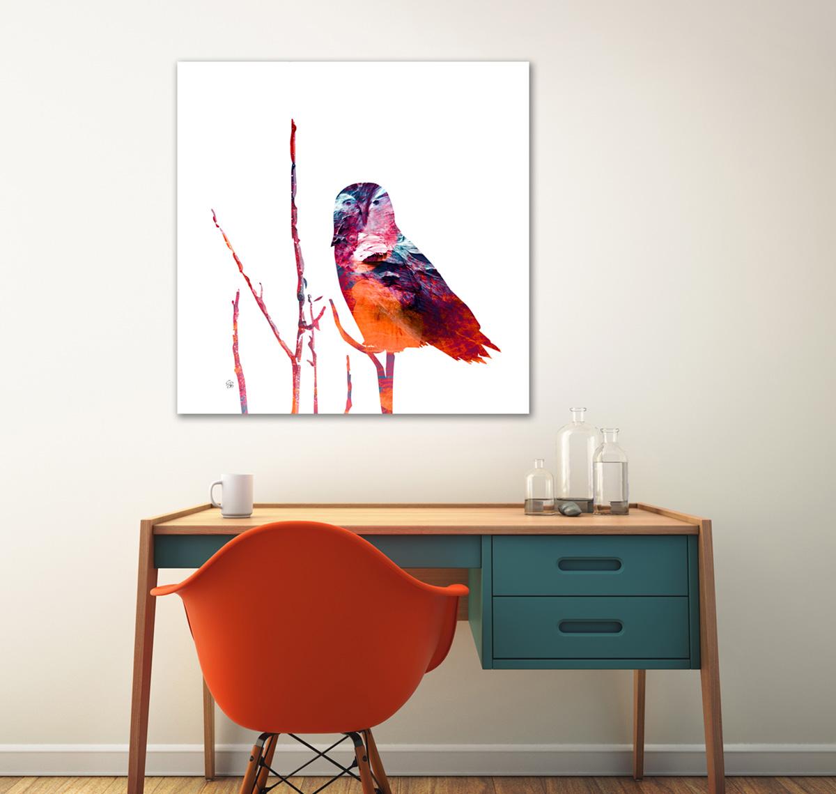Snowy Owl - Summer Reds