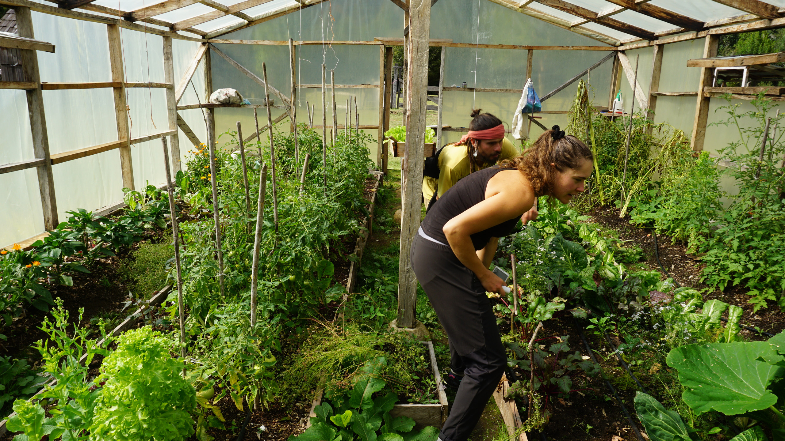 The camp greenhouse, with nearby compost of human waste (!)