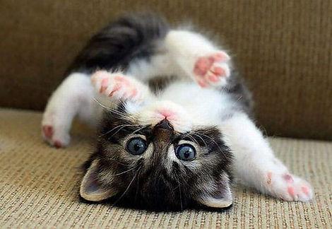 upside-down.jpg