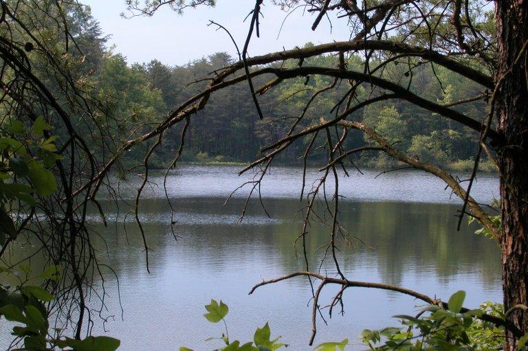 Pond2A