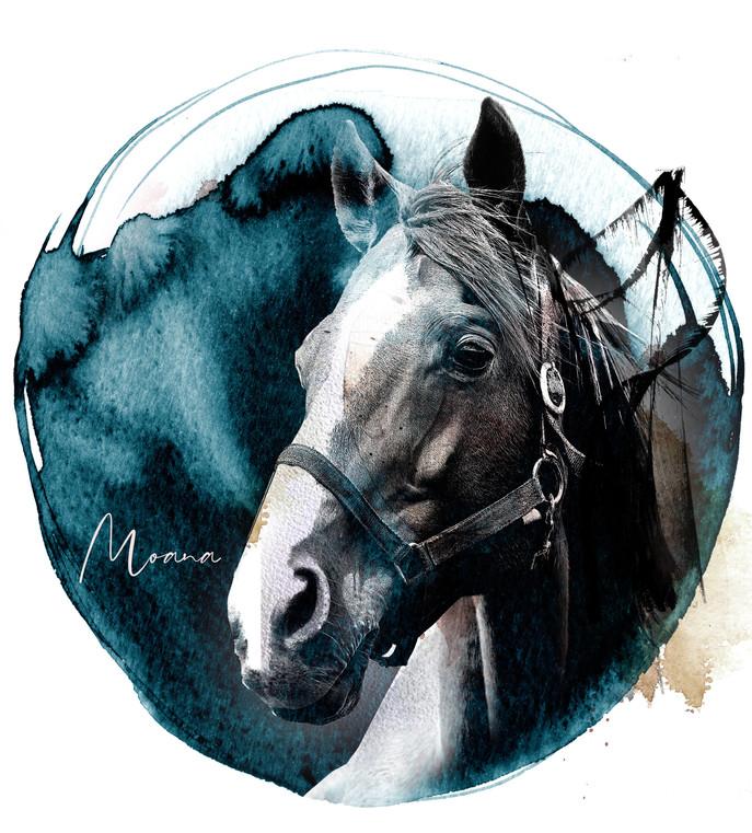 HORSE_WEB_New6.jpg