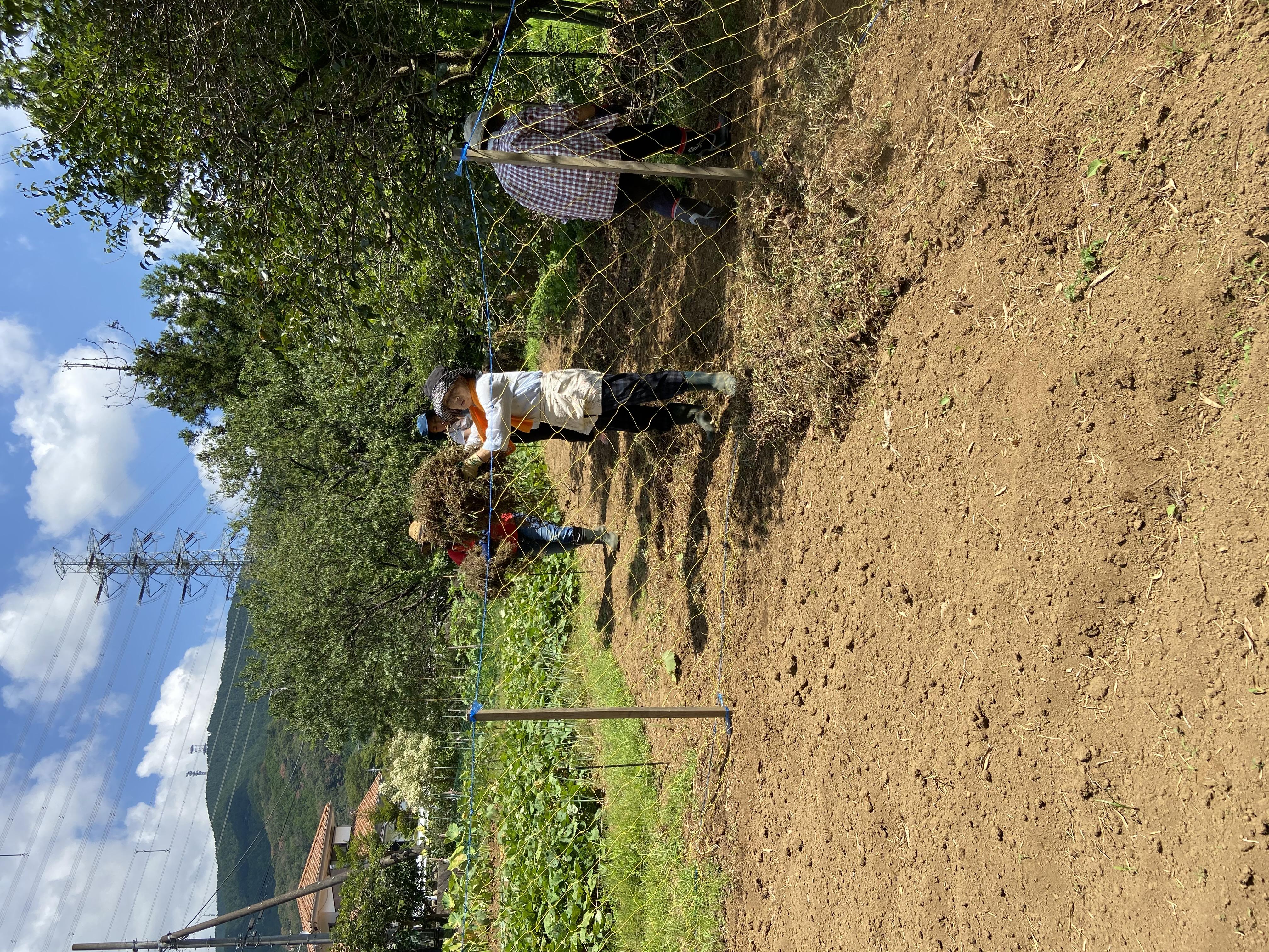 豊かな土壌作り~雑草集め~