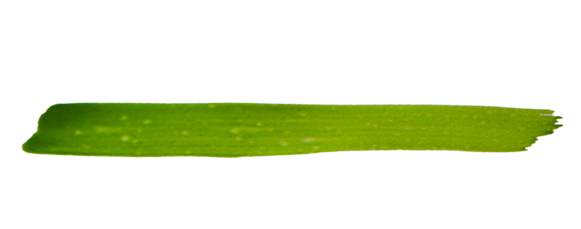 grüner_strich_4.png