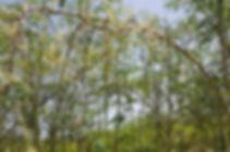 Moringa-Gaertchen-obentest_800x800.jpg
