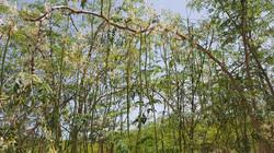 Moringa Garden