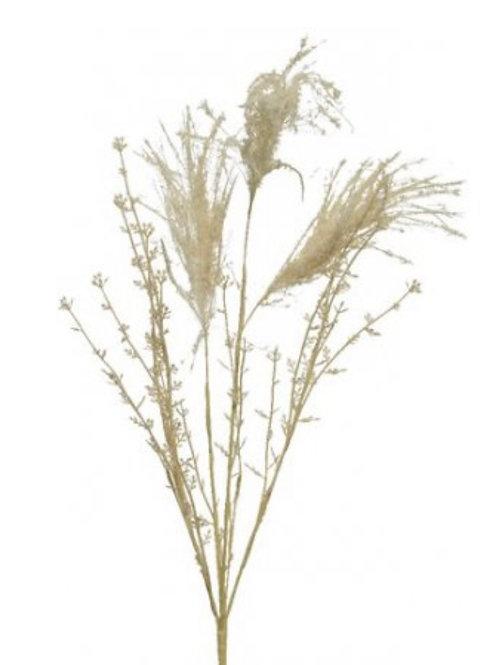Cream pampas grass