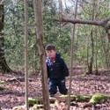 Woodland Exploring