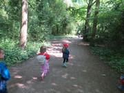 Woodland Adventuring
