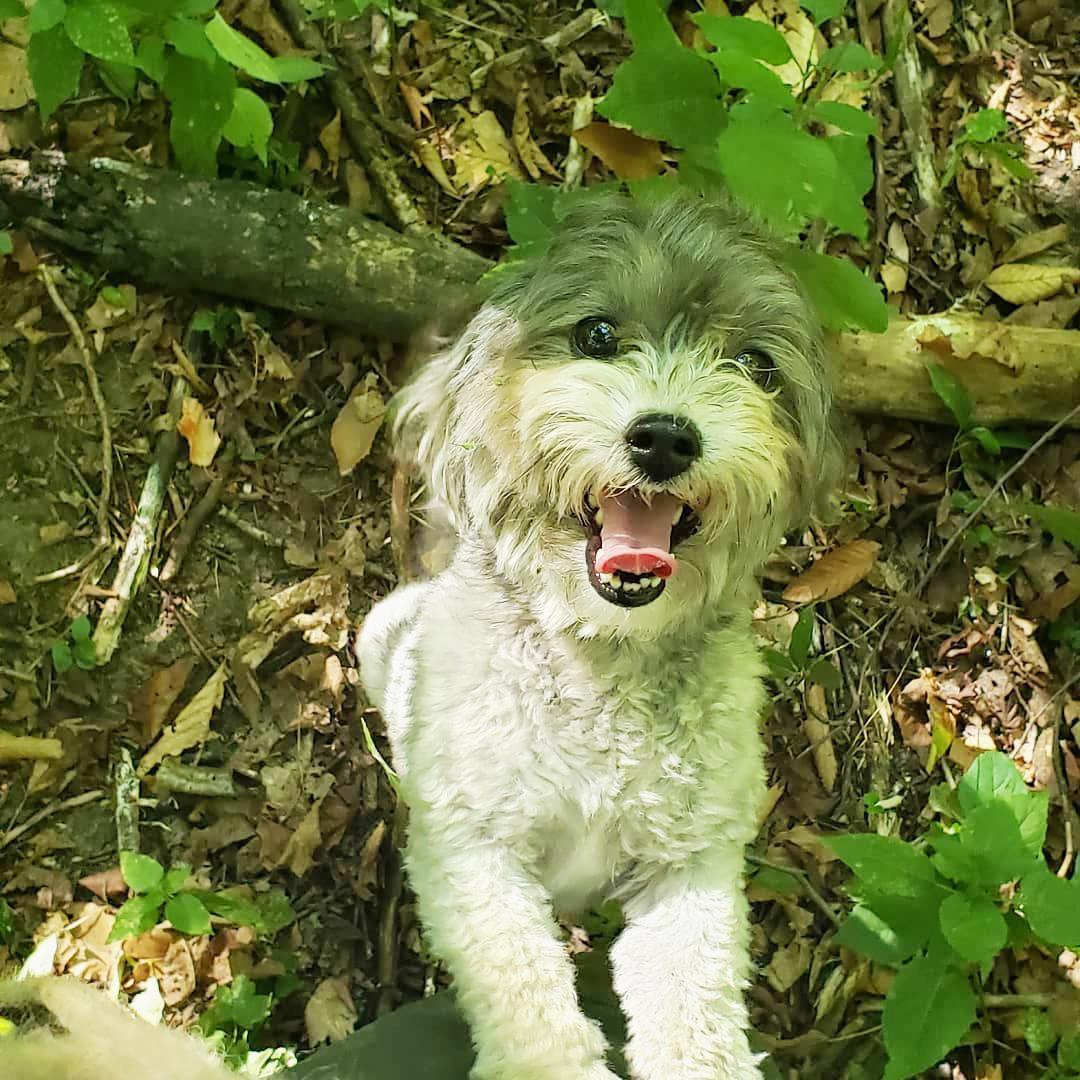 Heron pty - smiling dog