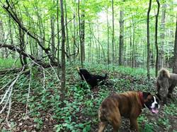 Heron pty - dogs in woods2