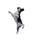 dog cavorting tiny.png
