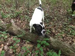 Heron pty - dog and log