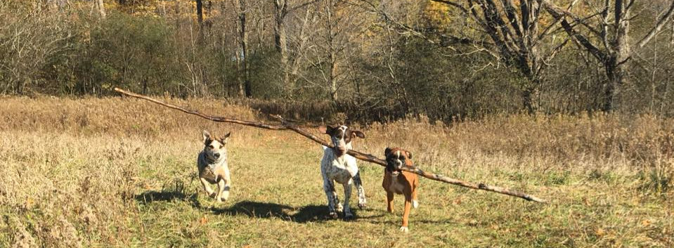 2018 DWH pic dogs with stick very long .