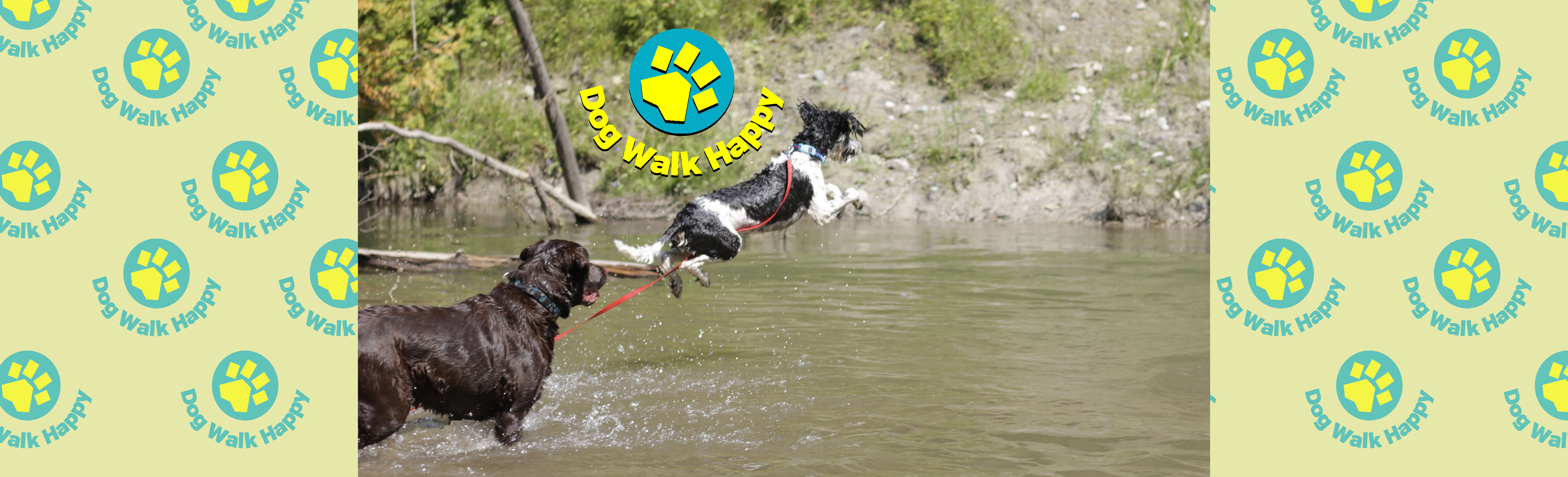 wix bnr dogs in water