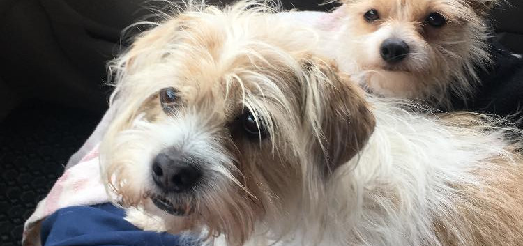 2018 DWH pic dogs in van 04.jpeg