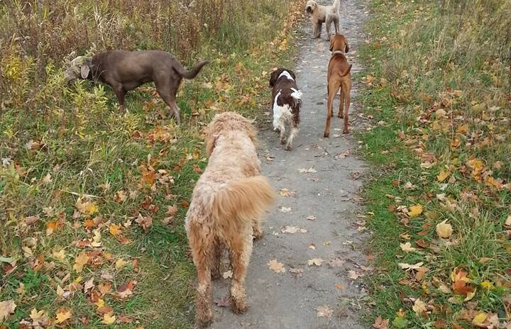 2018 DWH pic dogs on the trail.jpeg