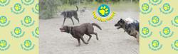 wix bnr dogs running