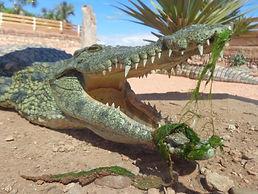 crocoparc.jpg
