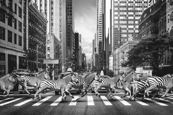 Zebracrossing.jpg