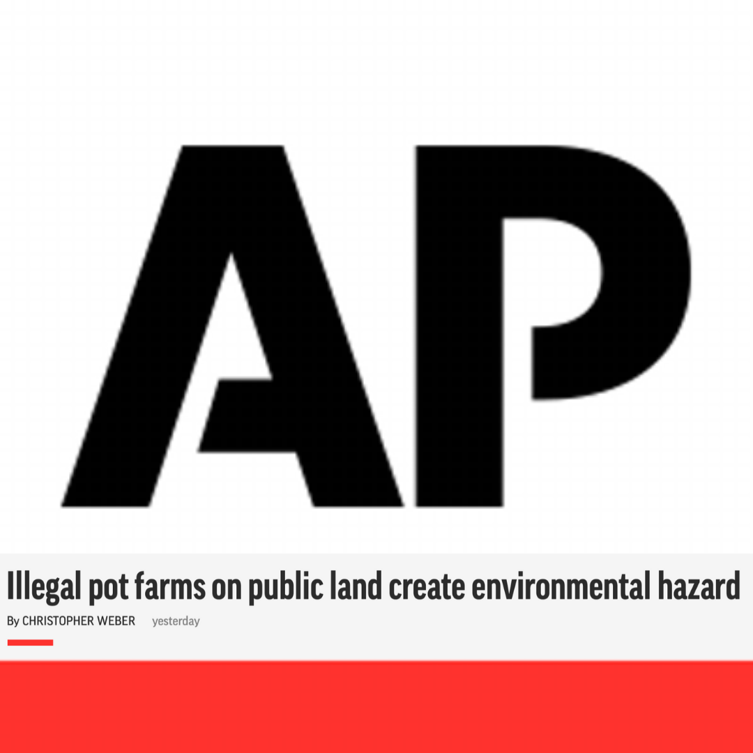 associated press .png